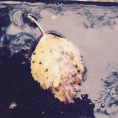 Fall #freedom