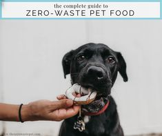 When it comes to zero-waste pet care, there's little helpful, non-judgey info out there. Especially when it comes to pet food. But we've got you covered! Love Your Pet, Your Dog, Diy Dog Treats, Dog Insurance, Sustainable Food, Healthy Pets, Homemade Dog Food, Pet Health, Dog Care
