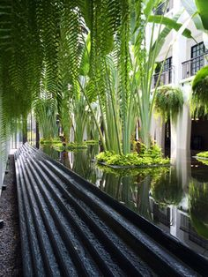 Garden Beauty At The Siam, Thailand Urban Landscape, Landscape Design, Garden Design, Pond Water Features, House Plant Care, Water Walls, Tropical Garden, Outdoor Areas, Pool Designs