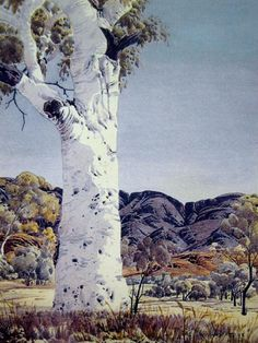 Albert Namatjira, Ghost Gum, 41 x 31 cm. watercolour and pencil, signed Albert Namatjira lower right. Aboriginal History, Aboriginal Artists, Australian Painting, Australian Artists, Australian Aboriginals, Long Painting, Indigenous Art, Indigenous Education, Australian Bush