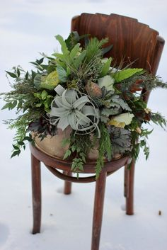Winter beauty featuring lots of evergreens and air plants.  Designed by Love 'n Fresh Flowers.