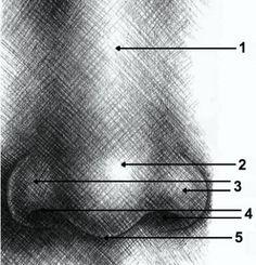 Corso di Disegno Gratis: Gli elementi del viso 2 - il naso.