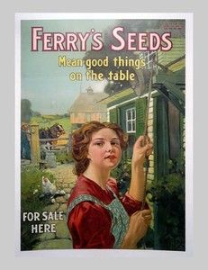 Ferry's Seeds
