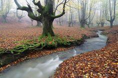 Magic Forest  Jose Ramon Irusta
