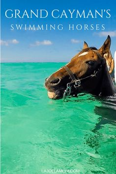 See why riding swimming horses is one of the best things to do in Grand Cayman