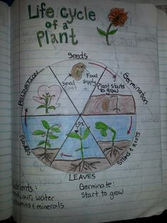 Life cycle of a plant introduction