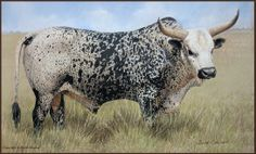Vundiza bhetjane nguni stud Bird Drawings, Animal Drawings, Cool Paintings, Animal Paintings, Texas Animals, Bucking Bulls, Longhorn Cattle, Bull Cow, Longhorns