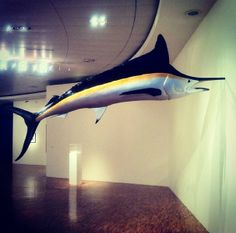 some strange #art in #Mexico #DF #instagram #fish #sculpture follow @MKSkyton