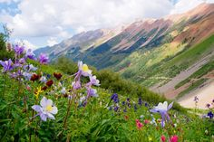 Wildflowers in the San Juan Mountains near Telluride.  Sorry for the mass of pins today everyone--all of us are sick and stuck inside resting!