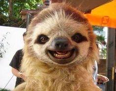 Animais mais felizes do mundo (30)