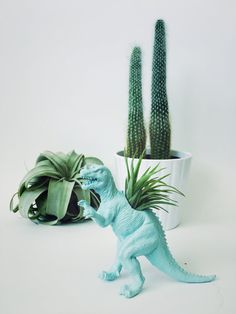 Small Pastel Blue Ceratosaurus Dinosaur Planter with Air Plant Included! Perfect for home, work, or even a dorm! These dinosaur planters add tons of personality to any room! Air plants are very low maintenance and perfect for lower light environments such as offices, living rooms,