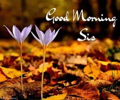 Looking for Good Morning Wishes for Sister? Start your day by sending these beautiful Images, Pictures, Quotes, Messages and Greetings to your Sis with Love. Good Morning Sister Images, Beautiful Morning Pictures, Good Morning Gif, Good Morning Picture, Good Morning Greetings, Good Morning Wishes, Good Morning Quotes, Prayers For Sister, Wishes For Sister