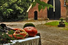 Autumn at the country seat of the Twickel castle. Gourds in sale. Delden, (Hof van Twente), the Netherlands. (by: harry eppink)