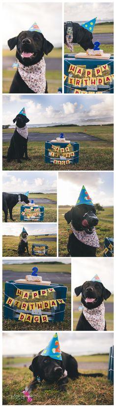 Dog cake smash | dog birthday | dog cake…