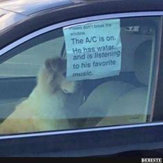 Super funny dogs with captions lol animal memes Ideas Funny Animal Memes, Dog Memes, Cute Funny Animals, Funny Animal Pictures, Cute Baby Animals, Funny Cute, Funny Dogs, Funny Memes, Random Pictures