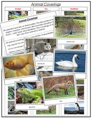 Animal Coverings - Scales, Feathers, or Fur