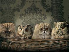 catsov