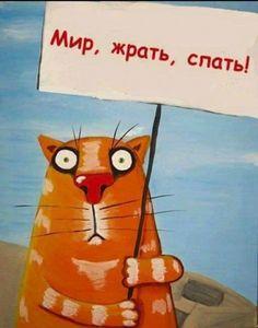 Пятничные майские котики!: sestratk
