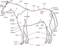Equine markings worksheet from breed registration form horse camp kick off ccuart Gallery