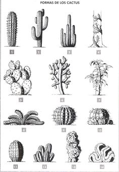 Formas de los cactus Se puede establecer diferentes tipos de cactus según su si… Cactus shapes Depending on the silhouette, different types of cacti can be found, and this is also a simple way … Kaktus Tattoo, Cactus Types, Cactus Drawing, Future Tattoos, Botanical Illustration, Cactus Illustration, Art Inspo, I Tattoo, Art Drawings