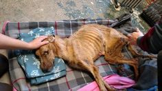 Emaciated dog found by shelter dumpster