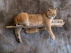 wildlife decor | Bobcat Mount Taxidermy Full Body Wildlife Decor Brand New | eBay