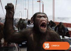 Un acto de compasión y arrogancia conduce a una guerra como ninguna y al origen del planeta de los simios.  El Origen del Planeta de los Simios - Domingo, 12 de enero, 22.00 #MeGustaFOX Mira contenido exclusivo en www.foxplay.com