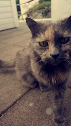 I met this beautiful cat! <3 <3
