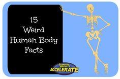 Standard deviants anatomy