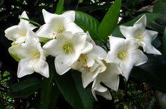 BELL FLOWER | Flickr - Photo Sharing!