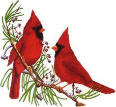 Christmas Bird, Christmas Clipart, Christmas Images, Christmas Items, Xmas, Christmas Printables, Christmas 2019, Christmas Crafts, Christmas Ornaments