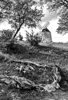 La souche & Le moulin de FredoRoiDuVelo est la Photo du Jour!  fotoloco.fr: Cours Photo gratuits et Concours Photos.  Une communaute de 22,000 passionnes! #NissanLezEnserune #34 #nature #paysage #paysages #instapaysage #beaupaysage #NatureetPaysage #Canon1018 #Canon1018mm #Canon600D #Canon #fotoloco #fotoloco_fr #concoursphoto #coursphoto #photographe #photodujour #francais #inspirationdujour #photographie http://fotoloco.fr/photo-detail/?id=88874