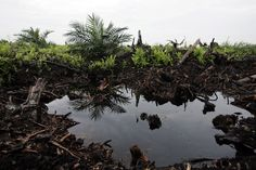 The destruction of rainforests has affected Indonesia in many ways including irregular river flows, soil erosion and reduced yield of forest products.