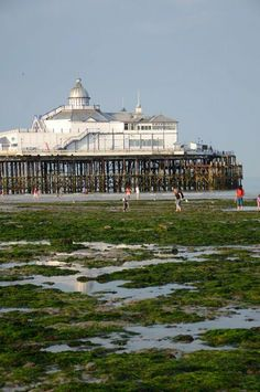 Seaweed and rockpools at Eastbourne Pier.
