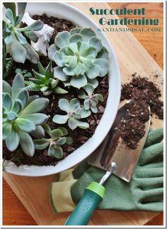 DIY Succulent Garden : Succulent Gardening
