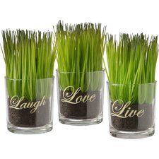Live Laugh Love Print Grass in Cylinder Jar (Set of 3)