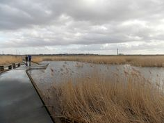Rainham Marshes at Purfleet, Essex, England - February 2014