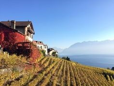 Unesco Inheritage Vignards of Lavaux. Best way to do the vignards walk is to take the train. Lausanne, Alps, Great Places, Switzerland, Places To Visit, Outdoor, Beautiful, Outdoors, Outdoor Games