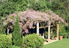 Congeia - trepadeira de ramagem densa para cobrir a pérgola de eucalipto. As florzinhas duram por cerca de 4 meses, do início do inverno à primavera. Não tolera ambientes muito frios e precisa de sol intenso.