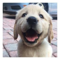 """themudcrusher: """" 6/27/17 Good morning Just filling your daily cute quota. Safe to say I have """"puppy fever"""" now. Happy Tuesday! Xx """""""