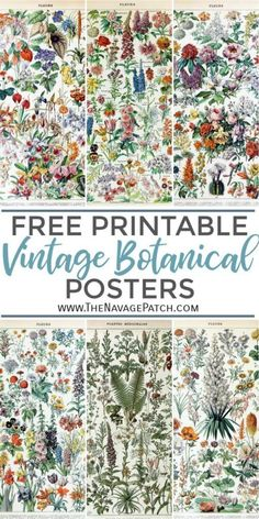 Amazing FREE Vintage Botanical Prints - - These gorgeous FREE Vintage Botanical Prints by famed natural history illustrator Adolphe Millot are perfect for a farmhouse gallery wall! Posters Vintage, Retro Poster, Retro Print, Vintage Botanical Prints, Vintage Art Prints, Botanical Posters, Vintage Wall Art, Illustration Botanique Vintage, Vintage Botanical Illustration