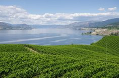 The Naramata Bench wineries are a fabulous day trip from Kelowna. Enjoy beautiful scenery and sample delicious wines at numerous award winning wineries. Things To Do In Kelowna, O Canada, Day Trip, Stuff To Do, Wineries, Scenery, To Go, Backyard, River