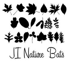 JI Nature Bats font by Jeri Ingalls - FontSpace Great leaf shapes with these dingbats