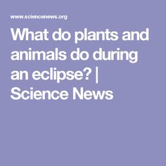 What do plants and animals do during an eclipse?   Science News