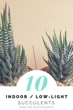 10 Best Indoor, Low-Light Succulents Fit some more plants in your home or office!