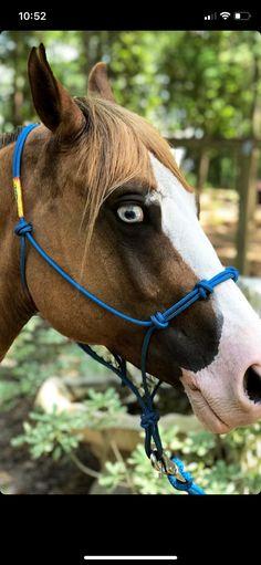 dac6faa83 104 mejores imágenes de Animales en 2019