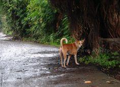 Male INDog near Karnala, Raigad District, western Maharashtra