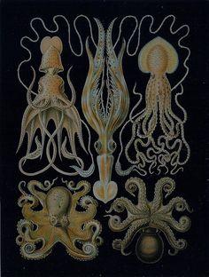 Green Octopus Art  by koiart71, via Flickr