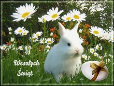 Easter, Decor, Style, Fluffy Pets, Happy Easter, Moving Pictures, Deutsch, Dekoration, Decoration