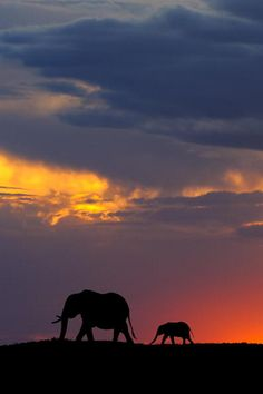 An African elephant and baby are crossing the Masai Mara at sunset.